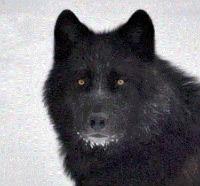 Wolf的头像
